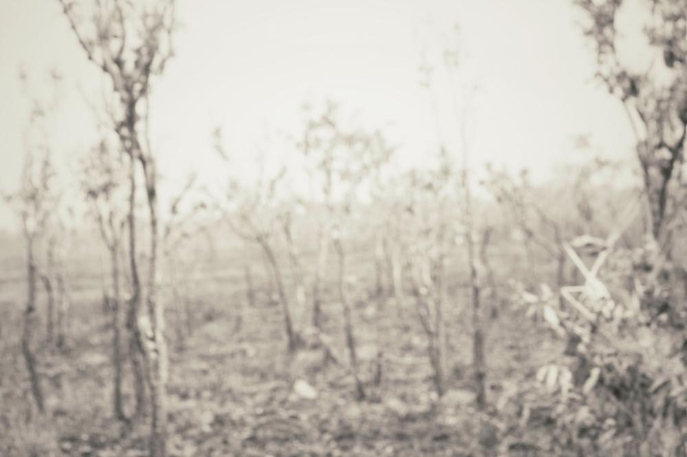 Schwarzweiß wirkendes Bild von kahlen Baumstämmen, die nach einem Waldbrand von Asche bedeckt sind.
