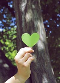Baum und Herz