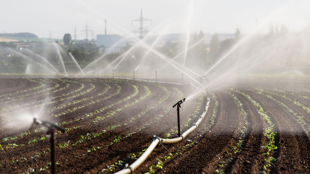 Ein Feld wird aus etlichen Sprühdüsen bewässert.