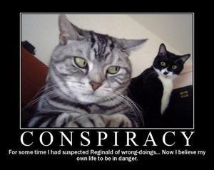 Eine Katze scheint von einer anderen Katze im Hintergrund beobachtet zu werden.