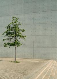 Baum vor Beton
